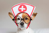 FIRST AID FOR DOGS AND CATS CERTIFICATION