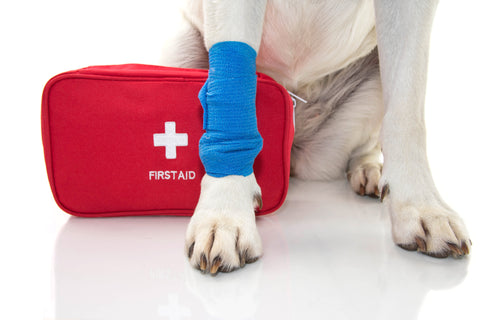 Pet First Aid: Introduction