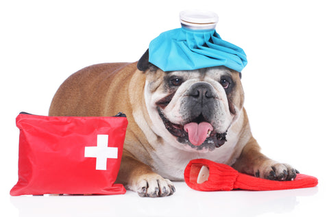 Pet First Aid: Conclusion