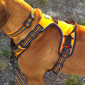 Ultimate Dog Harness - Padded, All Weather, Reflective