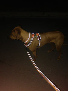 "Ultimate Dog Leash - 200 cm - 78.7"" - All Weather, Reflective - Example Night"