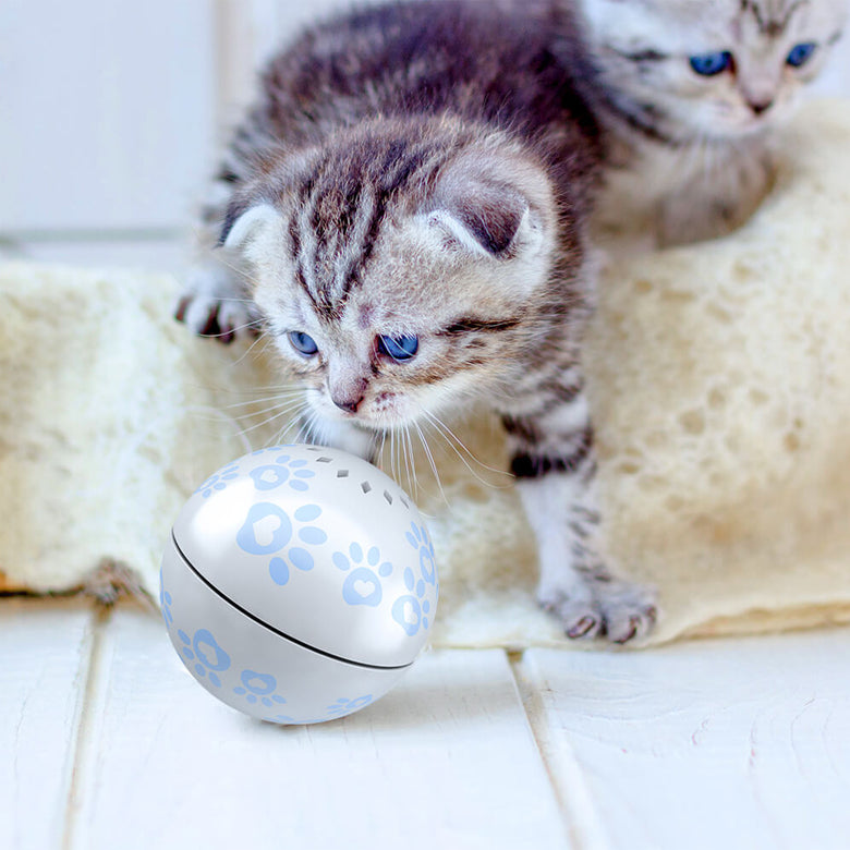 Cat Play Ball