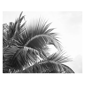 Palm Mono Canvas Print