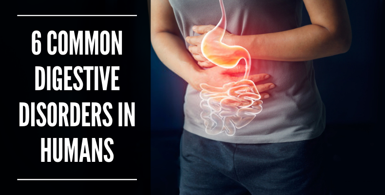 6 Common Digestive Disorders In Humans