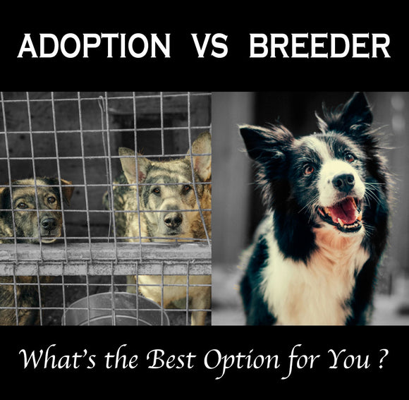 Adoption vs Breeder Blog, Le Pet Luxe