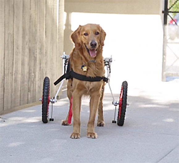 Dog Mobility Wheelchairs