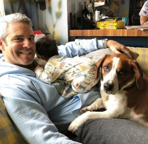 Andy Cohen and Wacha on Instagram, Le Pet Luxe, Celebrities and their pets