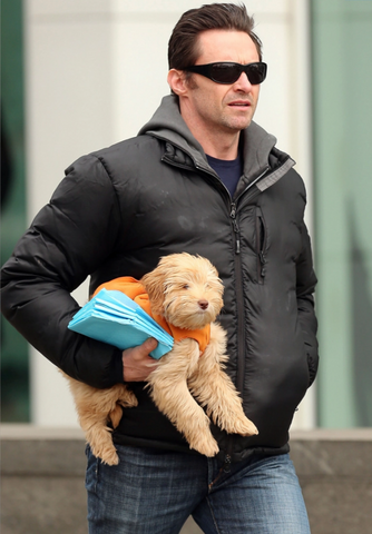 Hugh Jackman Carrying around his pup