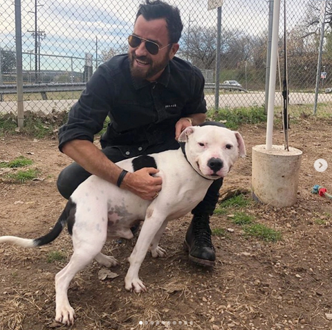 Justin Theroux rescues his own dogs and helps other shelter dogs too