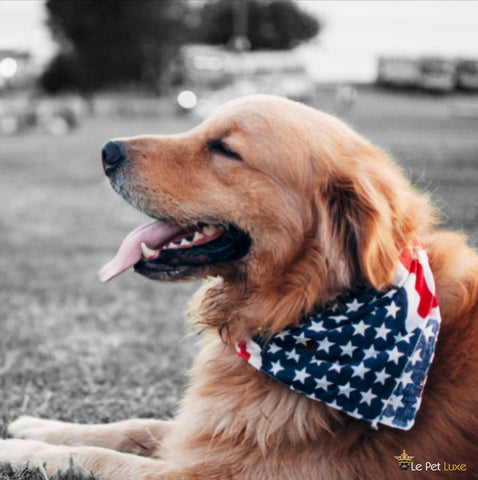 4th of July, le pet luxe