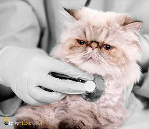 National take your cat to the vet day, Le Pet Luxe