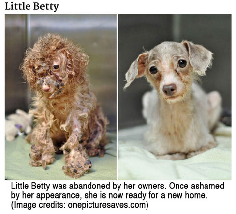 Little Betty abandoned by owners.