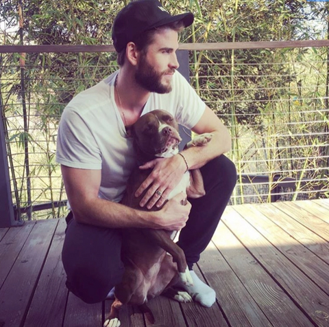 Liam Hemsworth, husband of famous dog mom Miley Cyrus