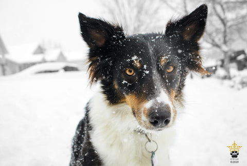Prepare for Winter Safety and your pet's paws