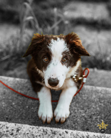 Happy National Mutt Day! 4 Reasons Why Mixed Breed Dogs Are Amazing