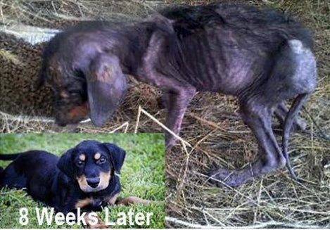 Rescued Starving Dying Dog