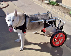 Le Pet Luxe Dog Wheelchairs