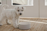 Naturally Cooling Dog Water Bowl ~ Concrete - Le Pet Luxe