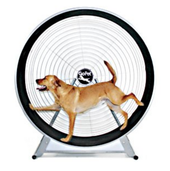 GoPet TreadWheel For Large Dogs - Le Pet Luxe