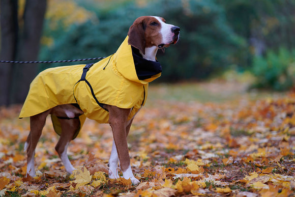 Visibility Raincoat ~ Yellow - Le Pet Luxe