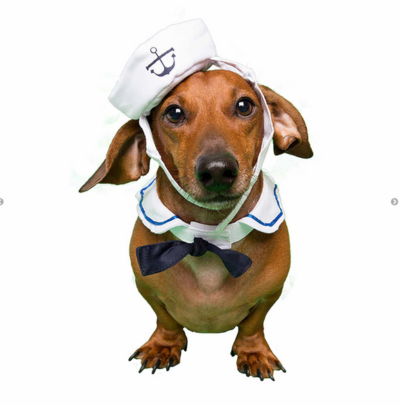 Sailor Costume for Small Dogs & Cats - Le Pet Luxe