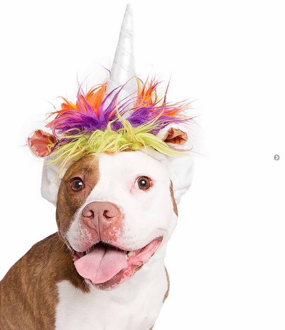 Unicorn Dog Costume - Le Pet Luxe