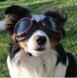 Doggles Sidecar ~ Copper - Le Pet Luxe