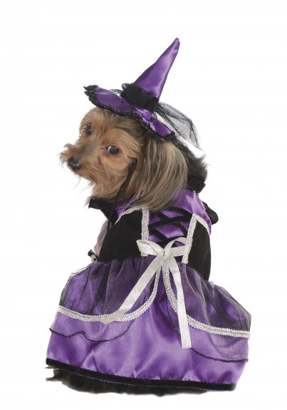 Purple Witch Dog Costume - Le Pet Luxe