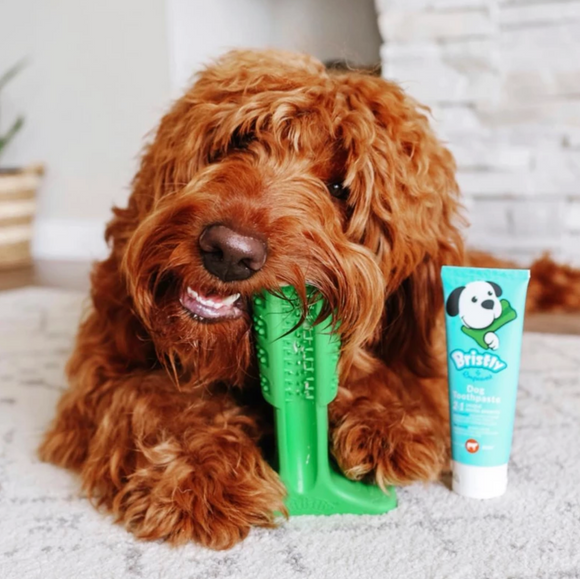 "BRISTLY ""DIY"" toothbrush for dogs (Brushing Stick) - Le Pet Luxe"