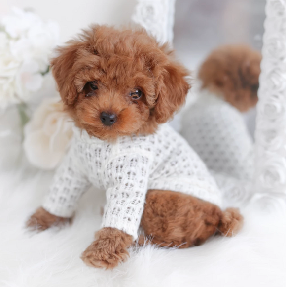 Sweet Magnolia Dog Sweater - Le Pet Luxe
