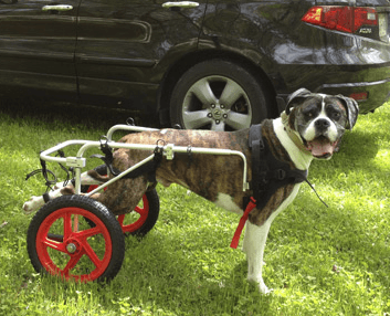 Best Friend Mobility Wheelchair - Quad Support/Full Support - Le Pet Luxe