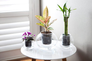 Extra Large Self-Watering Glass Pot with a wick (plant not included)