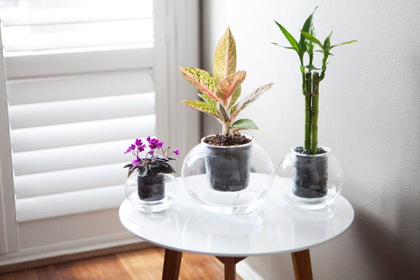 Large Self-Watering Glass Pot with a wick (plant not included)