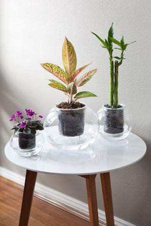Small Self-Watering Glass Pot with a wick (plant not included)