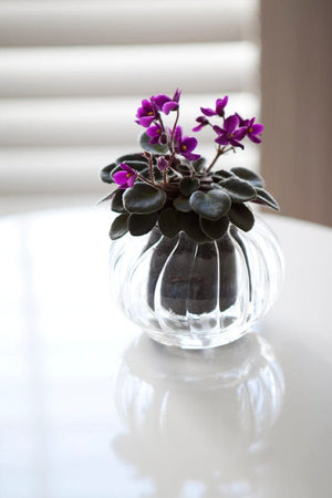 Small Ribbed Self-Watering Glass Pot
