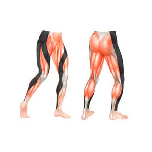 a60e12c61c577 Muscular Support Features (Performx Tight)
