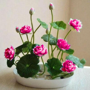 Pink Bonsai Lotus Seeds 10 Seeds Pack 50 Off With This
