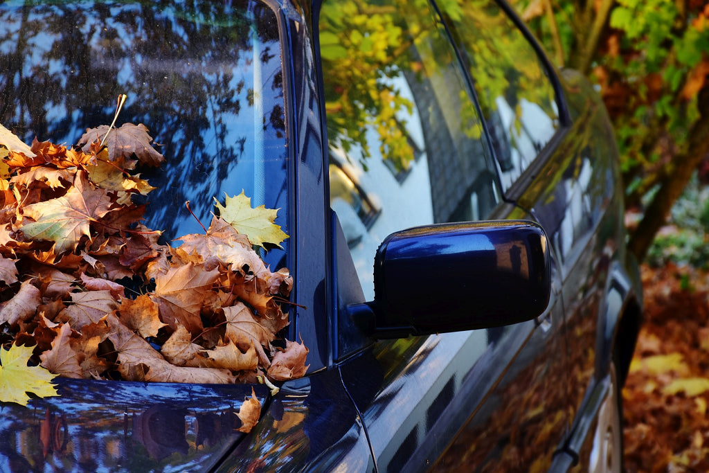 Fall Isn't Always Pretty-The Truth About What Those Pretty Leaves Are Doing To Your Car🍁