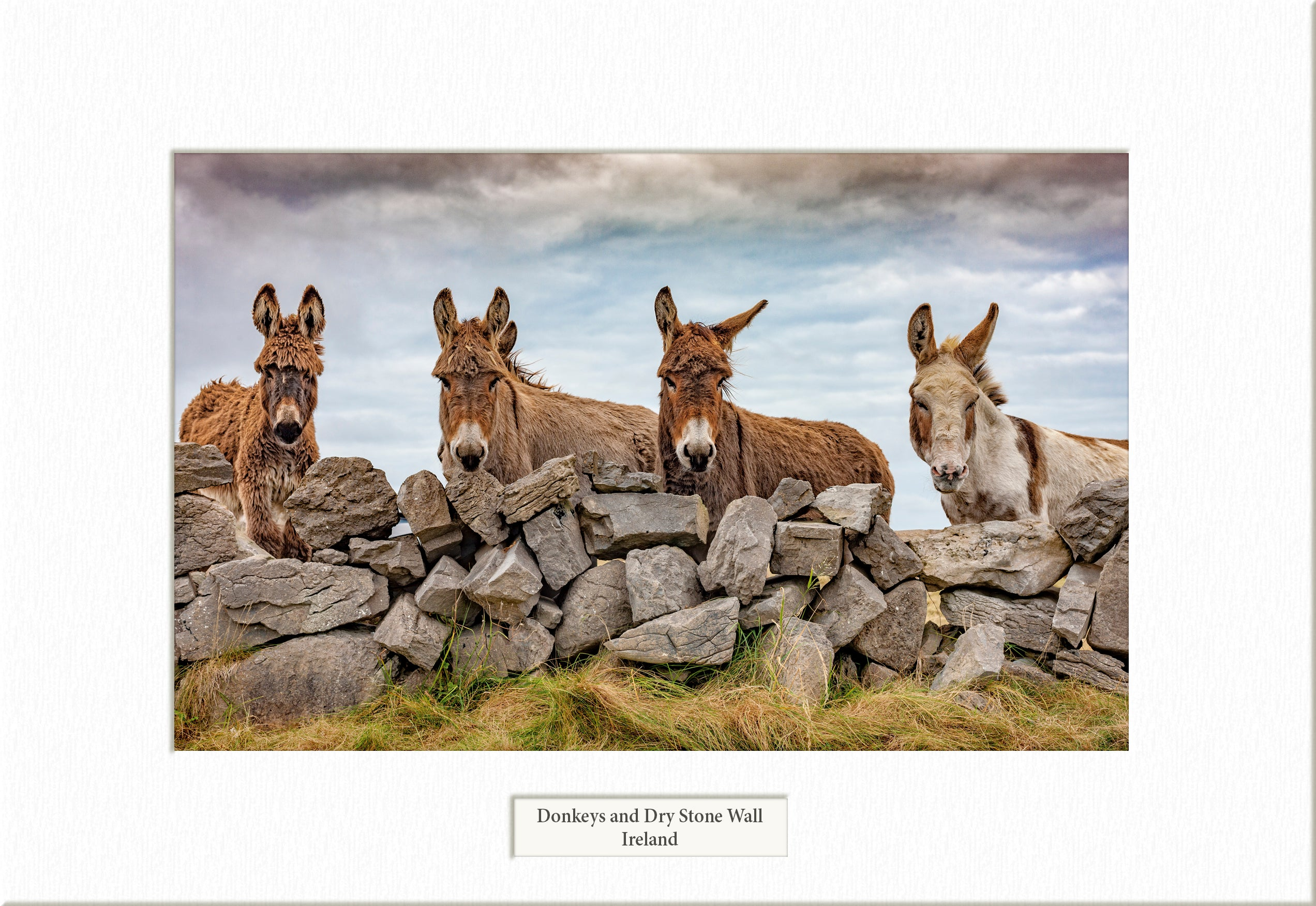 Donkeys and Dry Stone Wall  - Visions of Ireland
