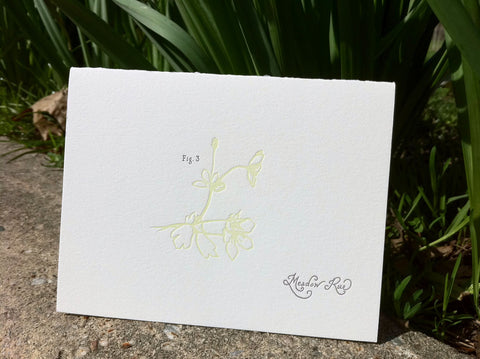 Spring Ephemeral Letterpress Cards (set of 8)