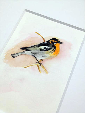 Blackburnian Warbler / Watercolor / 2014