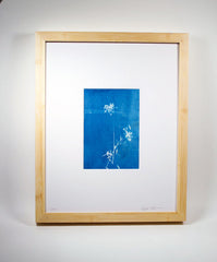 Cyanotype 1 • September 2013