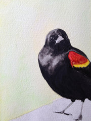 Red Winged Blackbird / 5.15.13