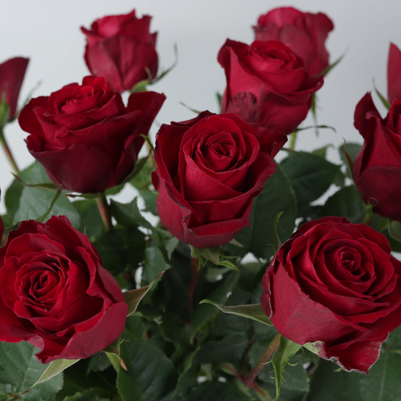 A Dozen Fairtrade Red Roses