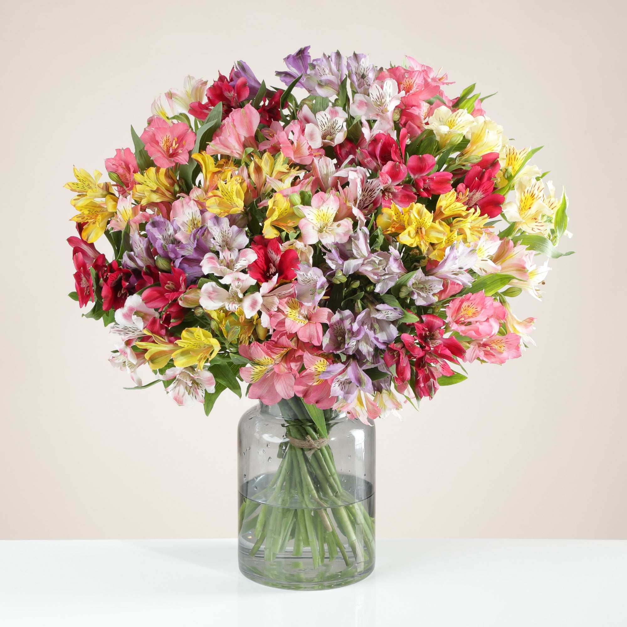 32 British Alstroemeria - Any Occasion