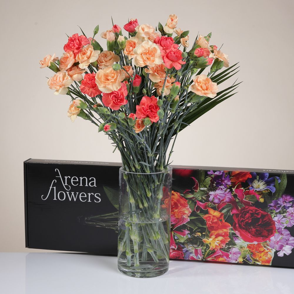Letterbox Mixed Spray Carnations
