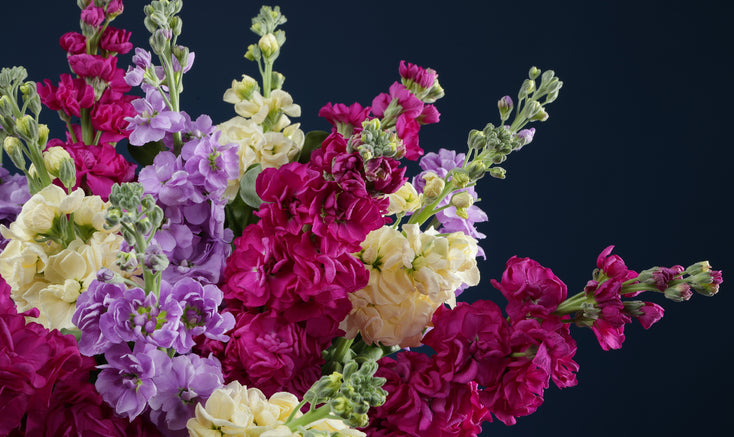 Mixed Scented Stocks