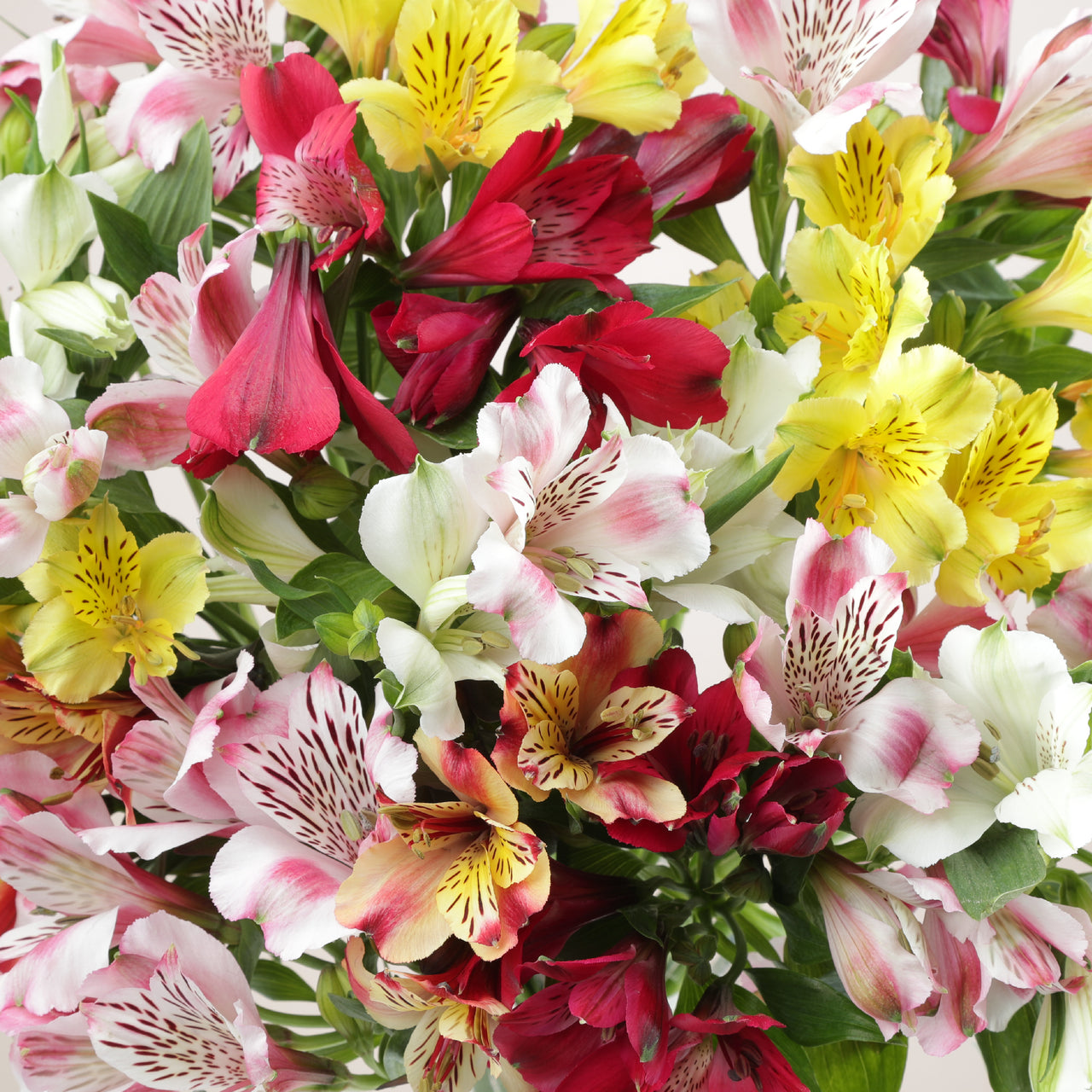 Letterbox British Mixed Alstroemeria