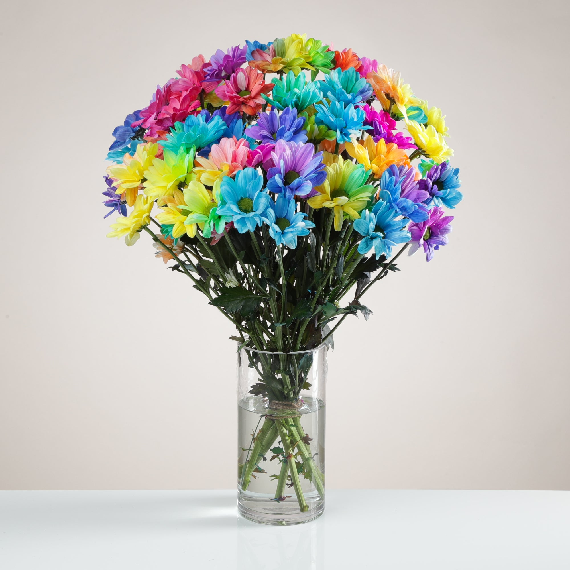 Rainbow Chrysanthemums - Any Occasion