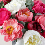 Luxury Peonies